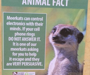 Fake Animal Facts Posted At The L.A. Zoo