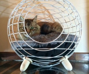 Feline fancies for the urban home: modern cat bed