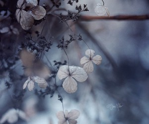 Fine Art Flowers Photography by Sara Mller