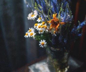 Fine Art Flowers Photography by Tatyana Mironova