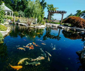 Fitzs Fish Ponds - Fish Pond Services NJ