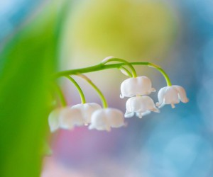 flora_addict: Adorable Flower and Plant Photography by Kaori Hoshimoto