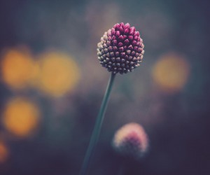 floral_shots: Beautiful Macro Flower Photography by Christian Mu