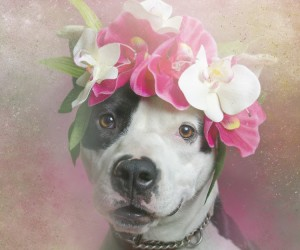 Flower Power, Pit Bulls of the Revolution by Sophie Gamand