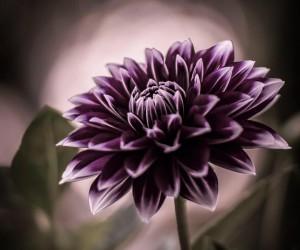 flowerstagram: Creative Flowers Photography by Hiko Takahashi