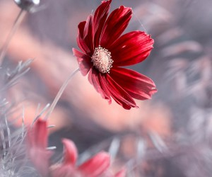 flowerstagram: Wonderful Flower Photography by Fabien Bravin