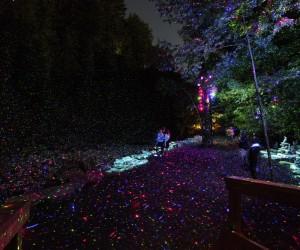 Foresta Lumina Light Installation by Moment Factory
