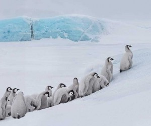 Franka Slothouber Captures The Emperor Penguin Colony in Antarctica