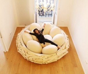 Giant Birdsnest: Building a Nest in Your Home