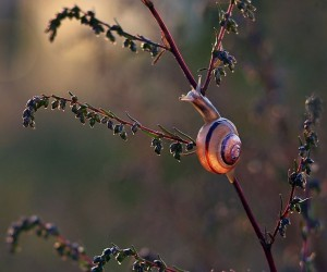 Gorgeous Snail Pics Taken in Poland