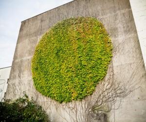 GROW: Botanical Graffiti in Besanon by SpY