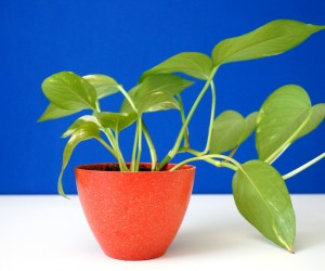 Hardy Houseplants That Double as Low-Maintenance Dcor