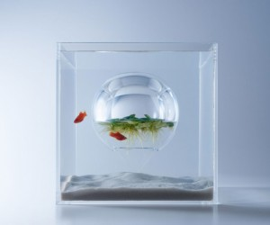 Haruka Misawas Sculptural Fish Tanks