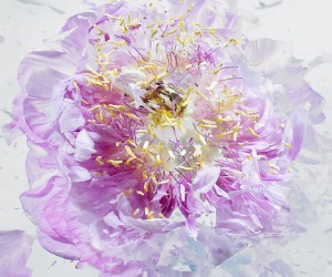 High Speed Exploding Flowers by Martin Klimas