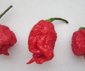 Hottest peppers in the world- Know more