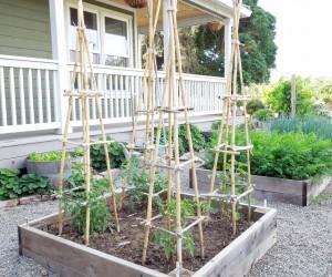 How to Make a DIY Tomato Trellis