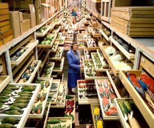Huge Secret Collections of The National Museum of Natural History