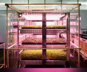 IKEAs Space10 Hydroponic Vertical Farm