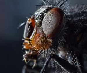 Insects Macro Photography by Sergey Babaev