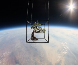 Japanese Artist sent Bonsai into Space