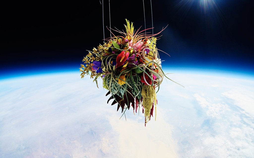 Japanese Flower Artist Sends Plants Into Space for Breathtaking Photo Series