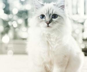 Karl Lagerfelds Cat Made Over 3 Million Euros in 2014