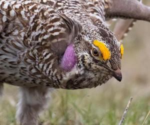 kings_birds: Wonderful Bird Photography by Liron Gertsman