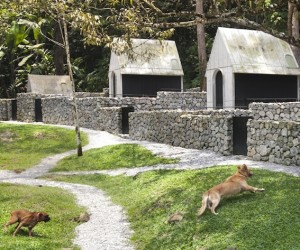 Luxury Dog Hotel Design