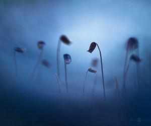 Macro Photography by Joni Niemel