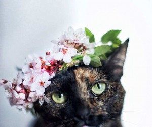 Magdalena Grzekowiak Captures Her Cat Through The Seasons