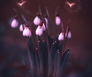 Magical Flowers Photography by Doreen Albrecht