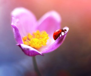 Magical Macro Photos Ladybugs and Flowers by Elena Andreeva