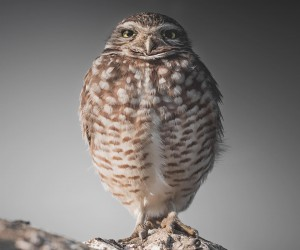 Magical Pictures of Owls: Bird Photography by Daniel J Nevares