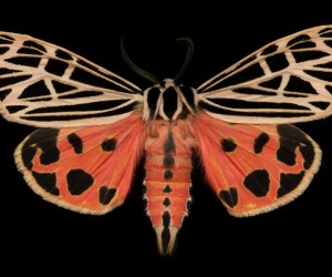 Majestic Moths Captured Under a High Resolution Scanner by Jim des Rivieres