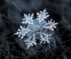 Microscopic Version Of Snow Flakes By Alexey Kljatov.