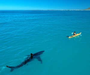 Mind-Blowing Wildlife and Underwater Photography by Thomas Peschak