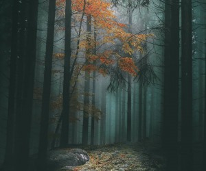 Mystical Forest Photography in Sweden by Gran Ebenhart