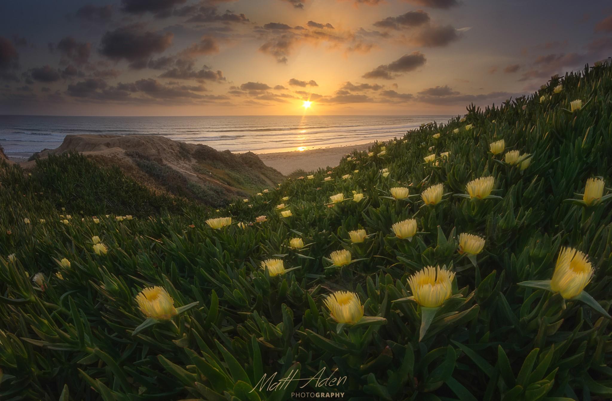 Nature Landscapes By Matt Aden