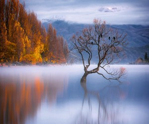 newzealand: Fine Art Landscape Photography by Rachel Stewart