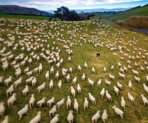 Nico Babot Captures the Beauty of New Zealand Through Wonderful Landscapes