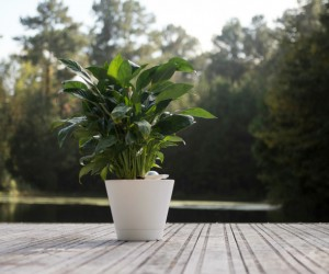 Nimbus: Self-Watering Planter