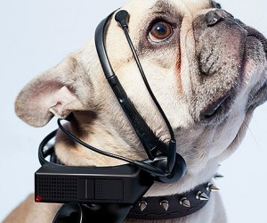 No More Woof: Dogs Thoughts To Human Language