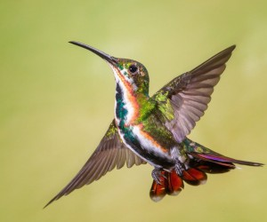 nuts_about_birds: The Magnificent Birds of Costa Rica by Jalil El Harrar