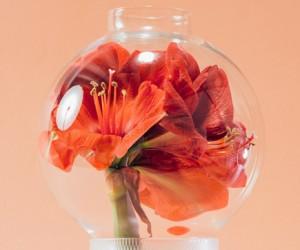 Olfattorio Vases by Cristina Celestino