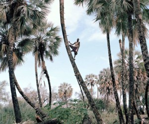 Palm Wine Collectors by Kyle Weeks