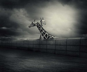 Photo Manipulations by Michal Giedrojc