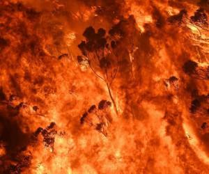 Photographer Nick Moir Documents The Massive Bushfires Across Australia