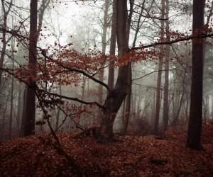 Photography by Heiner Luepke