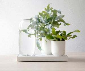 Pikaplant Designs Self-Watering System for Plants