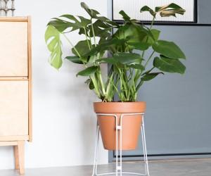 Plantscape by Spitsberg
